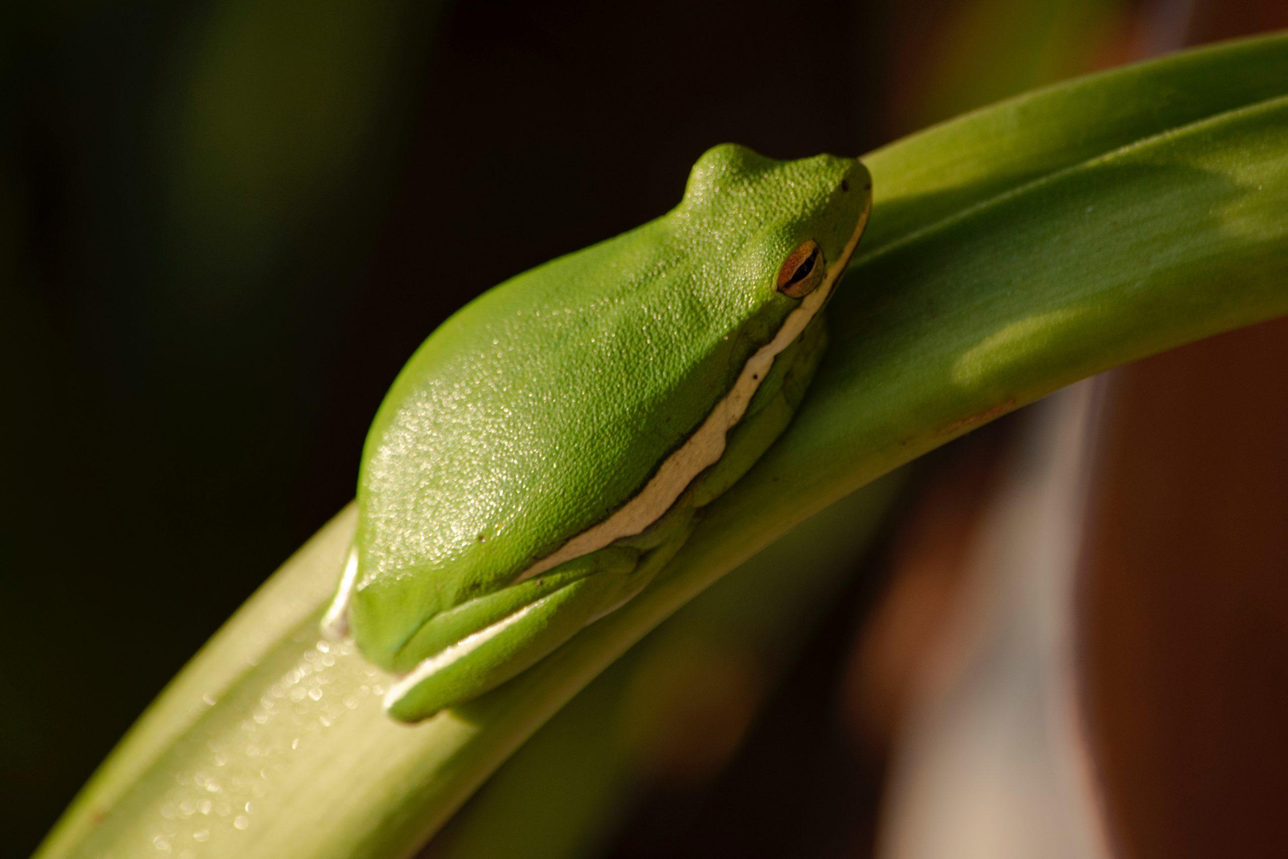 井の中の蛙—(1)